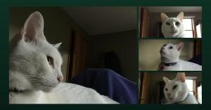 Kitty Montage (1)